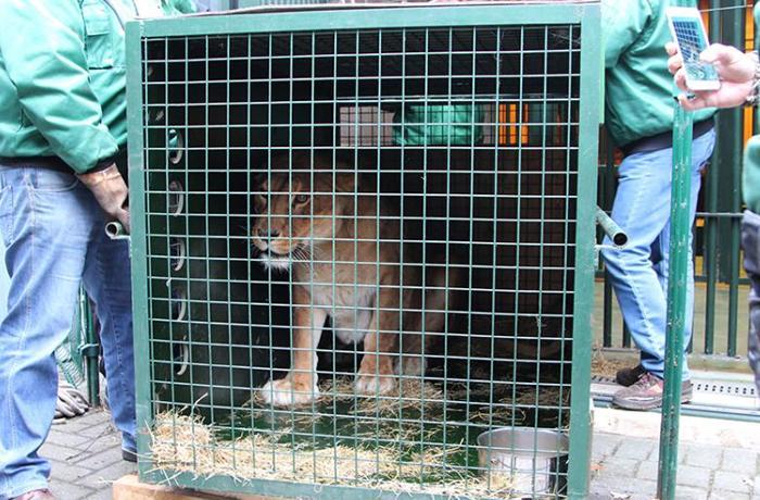 FAADA consigue trasladar 47 animales del Zoo de Peña Escrita