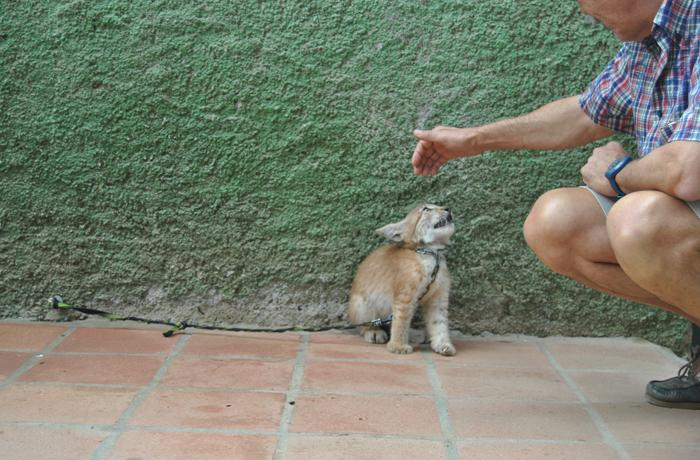 Últimos avances en el caso del Zoo de Castellar