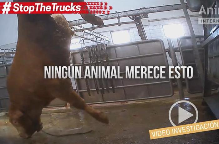 #StopTheTrucks, vídeo de la investigación
