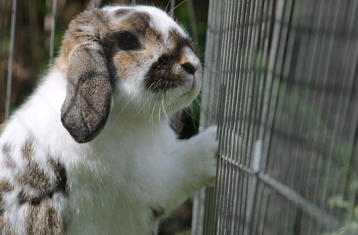 El 9 de febrero únete a las jornadas de lucha contra la experimentación animal