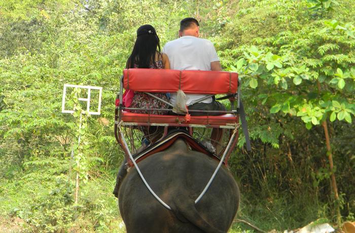 222 bloggers de viajes se unen contra el maltrato animal en el turismo