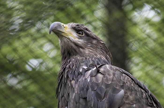 Descartan trasladar fuera de Barcelona parte del Zoo del Parc de la Ciutadella