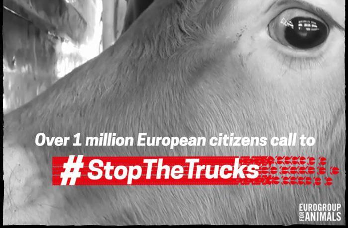 Más de 1 millón de ciudadanos europeos piden poner fin al transporte de animales de larga distancia