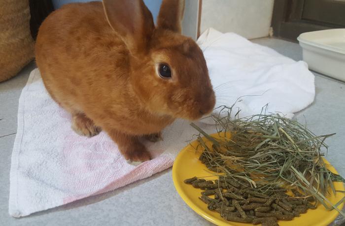 Las problemáticas de mantener a un conejo en casa