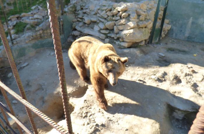 FAADA alerta de la posible muerte de los animales que quedan en el zoo de Peña Escrita