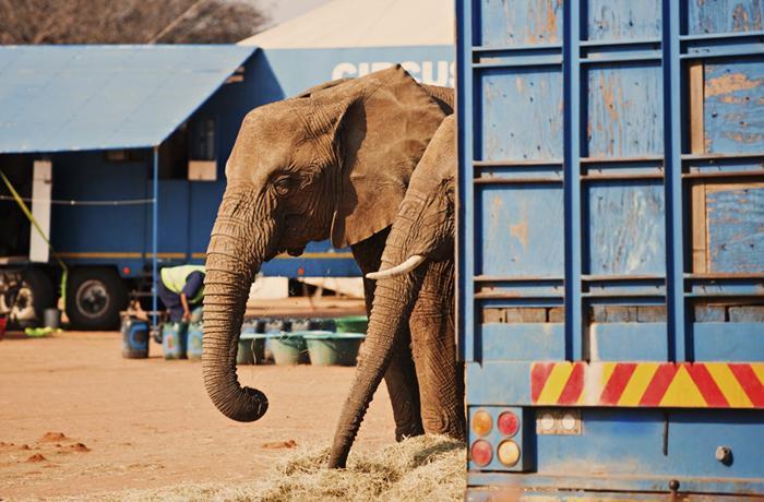 InfoCIRCOS se ofrece a acoger a los animales de los circos