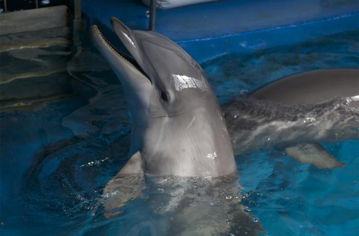 En Barcelona, jornadas en búsqueda de alternativas a los delfinarios