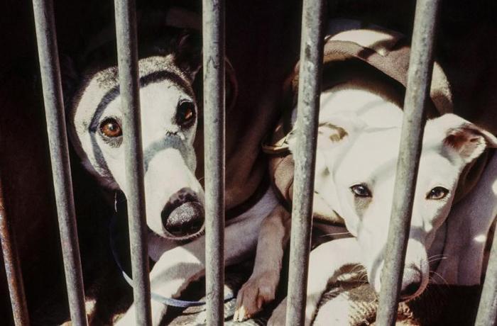 Ayuntamientos de Terres de L'Ebre envían animales abandonados a comunidades donde está permitido el sacrificio