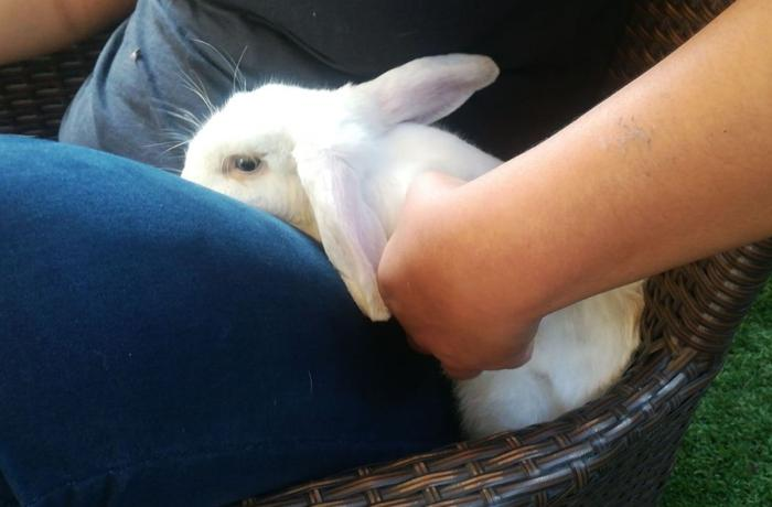 Rescatamos y reubicamos a otro conejo abandonado