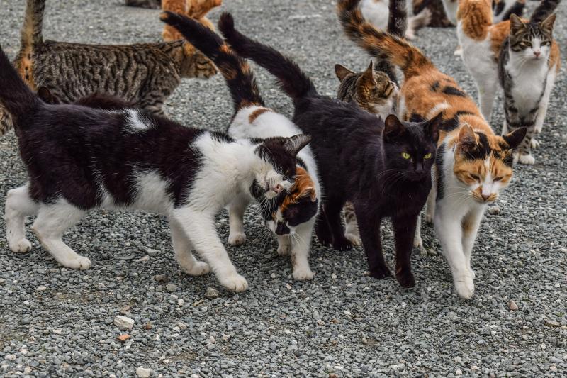 FAADA se reúne con el Ayuntamiento de Castelldefels para mejorar las vidas de los perros y gatos del municipio