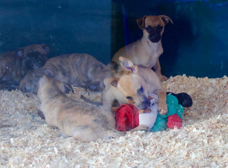 Las denuncias de FAADA logran el cierre de otra tienda de animales