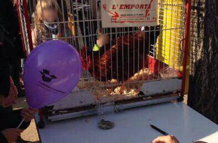 ¡Pide al Ajuntament de Cardedeu que acabe con la explotación animal en su feria de Navidad!