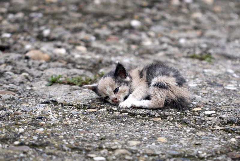 5 graves errores a la hora de alimentar un animal rescatado