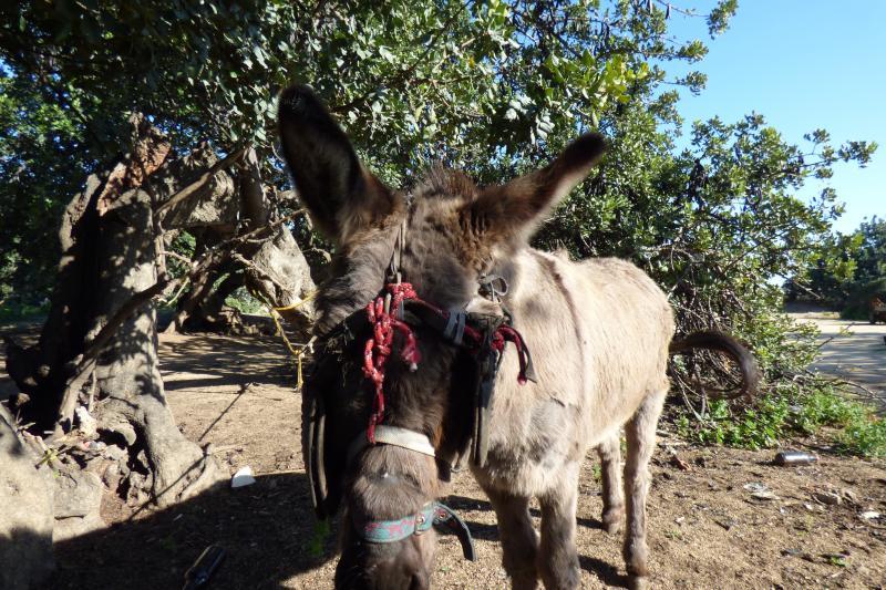 Denunciamos ante el Ayuntamiento de Mataró el propietario del burro utilizado para llevar chatarra