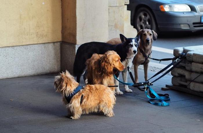 8 razones para no dejar a tu perro sin vigilancia en la calle