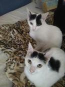 Taca y Cat