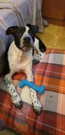 NALA, 6 meses rescatada de un abandono