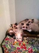 5 Bebes gatito en adopción