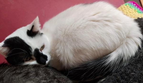 MIA, un amor de gatita. Otro rescat de la calle
