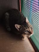 KENDRA 3 mesecitos hermanita de TIGER