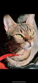 LOLA, una preciositat que s'ha quedat Orfe, els gats poden viure fin 23 anys