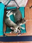 KIWI I WI-FI  bebes de 2 mesets i mig (adopció conjunta)