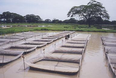 Vive sana acuicultura la otra cr a intensiva for Granja de peces
