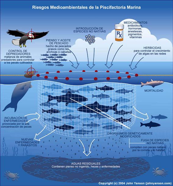 Vive sana acuicultura la otra cr a intensiva for Jaulas para cria de peces