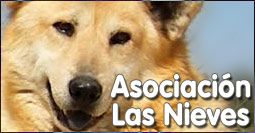ASOCIACI�N las NIEVES para la PROTECCI�N ANIMAL MADRID