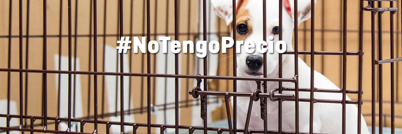 Ayúdanos a incluir la prohibición de la venta de animales de compañía en la nueva Ley Marco de Bienestar Animal