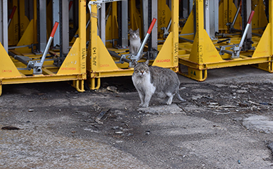 Pide a SEAT que permita la gestión ética de los gatos de su fábrica de zona franca en Barcelona