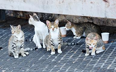 Súmate: ¡España necesita un marco legal estatal para proteger las colonias de gatos!