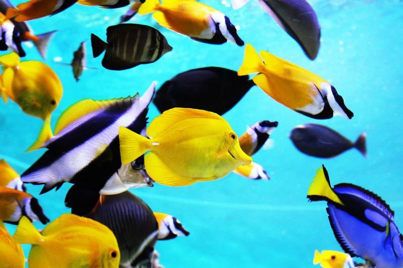 Carta a un colegio que organiza salidas al Aquarium de Barcelona