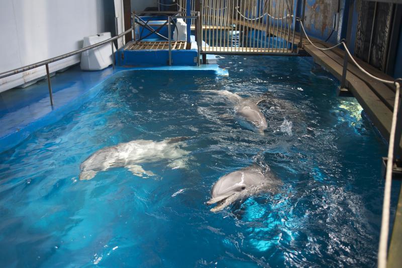 Pedimos empezar un programa de habituación para los delfines de Barcelona