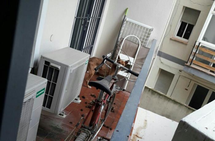 Denunciamos a los propietarios de un perro permanentemente encerrado en un balcón