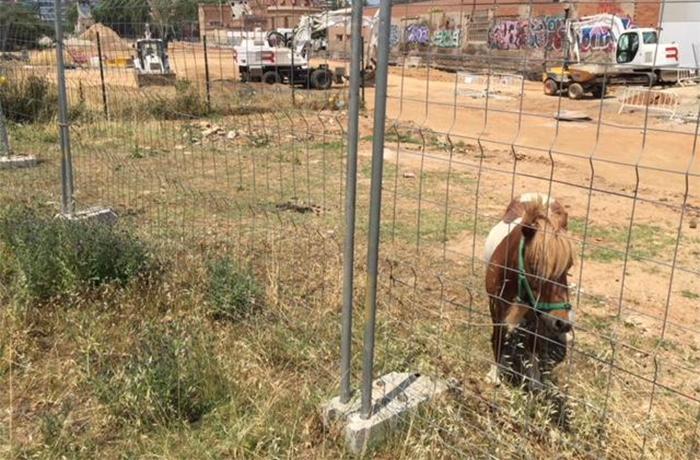 Conseguimos el decomiso de un poni atado en un solar de Barcelona