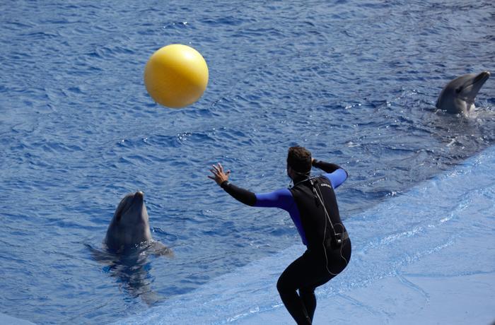 El contenido educativo de las exhibiciones brilla por su ausencia en los delfinarios de España