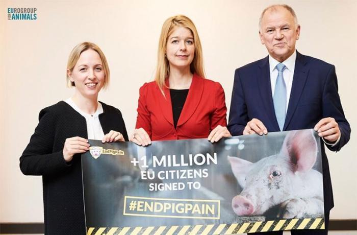 Entrega a la Comisión Europea del millón de firmas de #EndPigPain