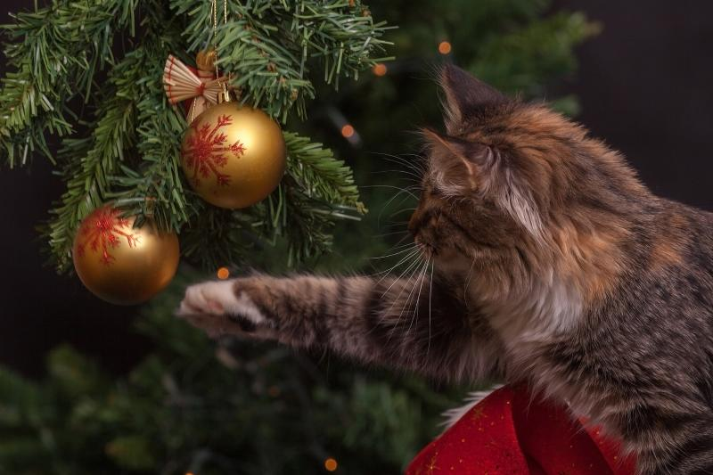 Por qué no deberías regalar animales esta Navidad