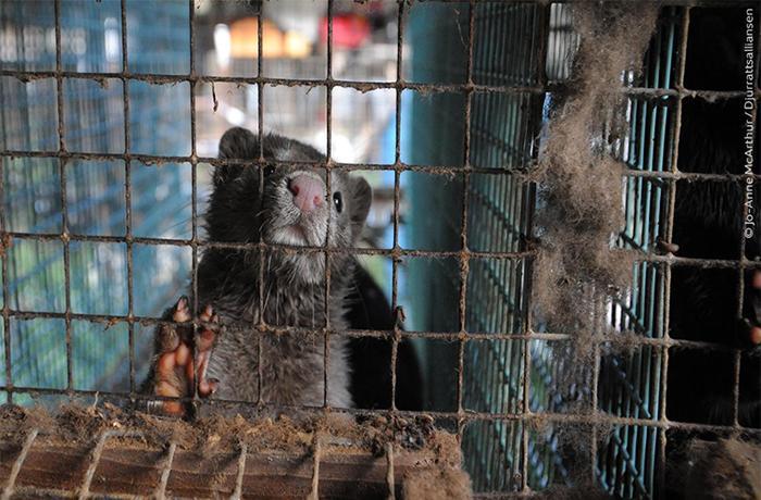FAADA y ANDA piden a la Comisión Europea que no legitime la industria peletera