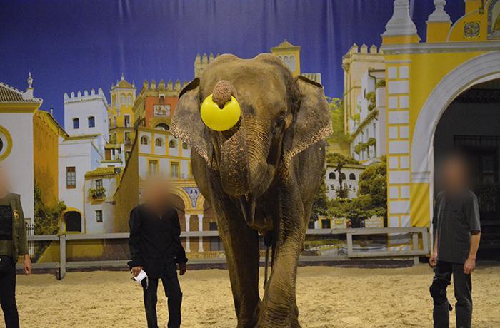 Comprobamos que Dumba es utilizada en espectáculos en MundoPark Sevilla