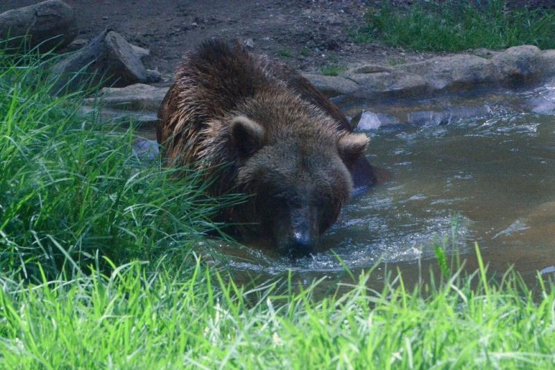 Comunicado de FAADA sobre el zoo de Ayamonte