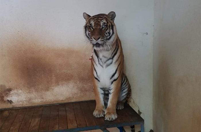 Rescate de los animales de Ayamonte