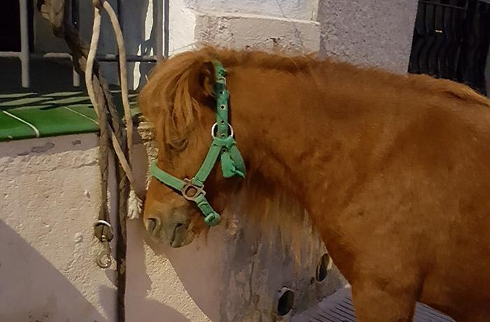 Celebramos que este año el Mercado Medieval de Calafell será sin animales