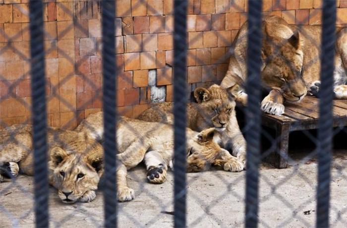 Zoos y conservación: mitos y realidad