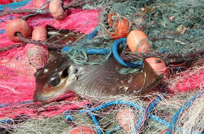Las redes de pesca están matando nuestros mares