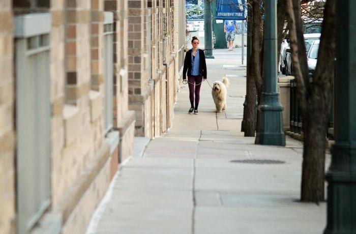 Paseos con perro en época de confinamiento