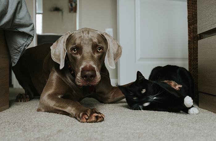 El confinamiento también afecta a perros y gatos