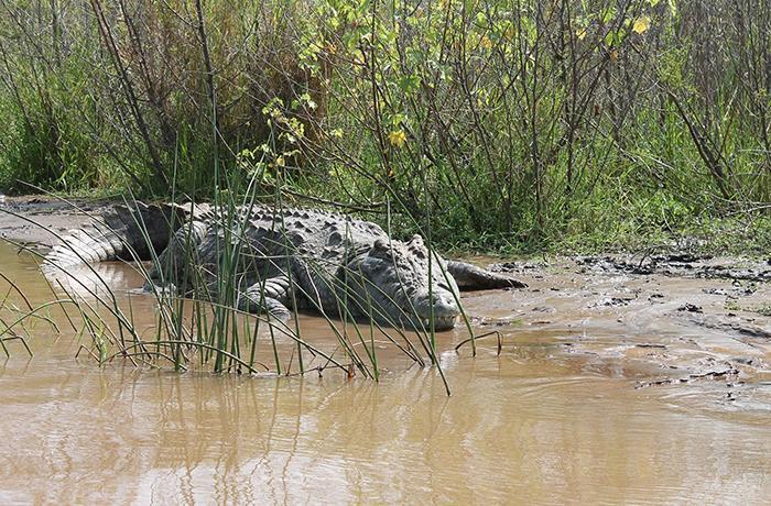 Peligro por la presencia de un cocodrilo del Nilo en el río Duero