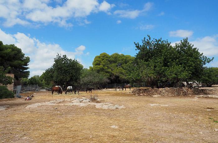 Preocupación por la suerte de muchos animales en Catalunya ante un nuevo posible confinamiento